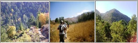 Join Cyclamen Hike – Ehden