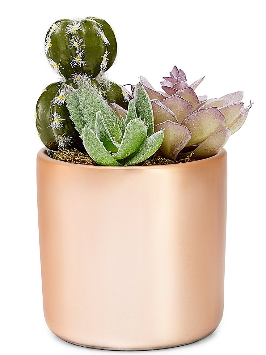 A copper, metallic succulent pot from our new line