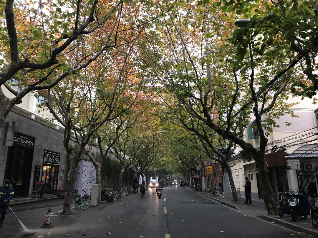 Leafy streets through Shanghai's charming French Concession.