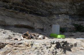 a cat retreat