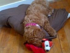 Fox snuggles