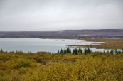 Þingvellir, the largest natural lake of Iceland.