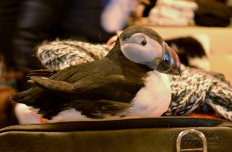 Puffin at the gift shop