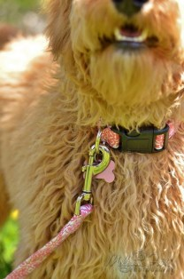 collar and leash set from RHC Pets