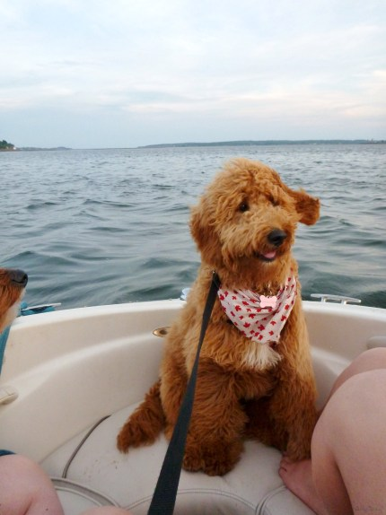 Gracie is a natural on the water