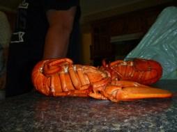 Island lobster