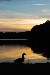 Jamaica Pond in Boston at sunset
