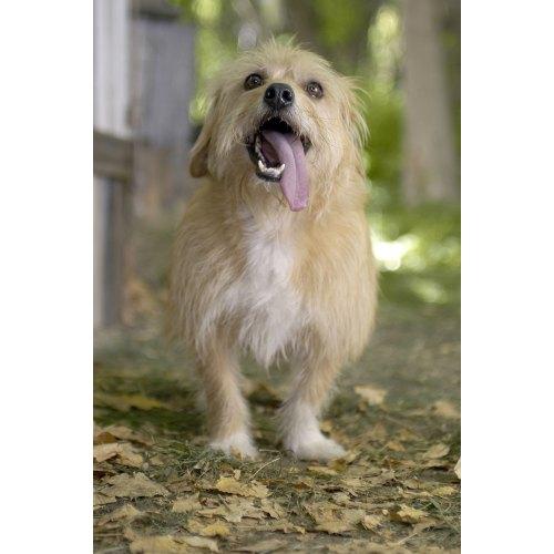 Medium Crop Of What Kind Of Dog Is Benji