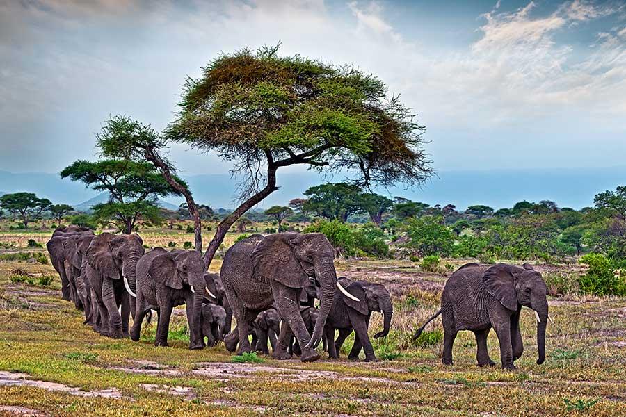 Benny-Rebel-Fotoreise_Fotosafari-Tansania-Ruanda-Afrika_A105
