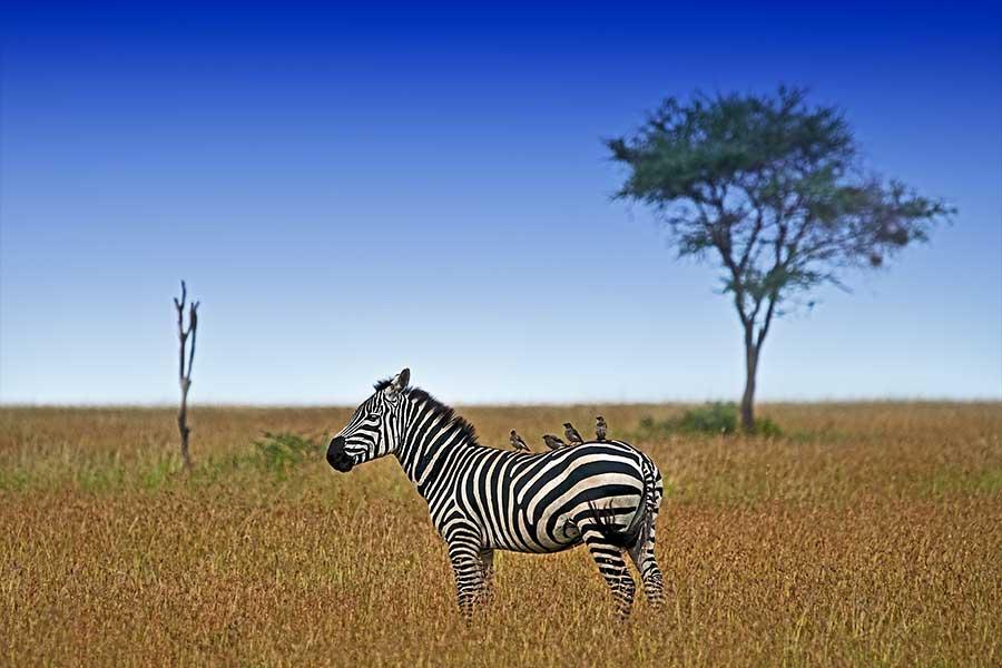 Benny-Rebel-Fotoreise_Fotosafari-Tansania-Ruanda-Afrika_A108