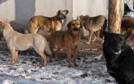 У Мексиці бродячі собаки прийшли на похорон жінки, яка про них піклувалася