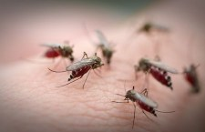 According to SCDHEC, most people infected with West Nile virus have no symptoms of illness.