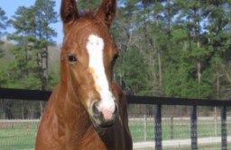 Horses should be vaccinated to prevent infection with Eastern Equine Encephalitis, says State Veterinarian Boyd Parr. Image Credit: Clemson University