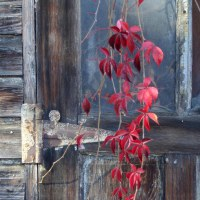 """October Featured Landscape and Desktop Calendar: """"Red"""""""