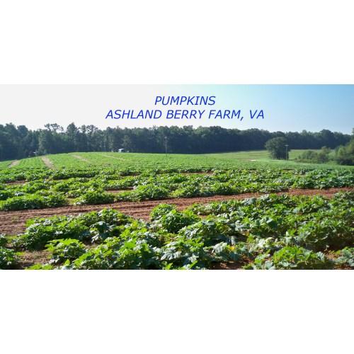 Medium Crop Of Ashland Berry Farm