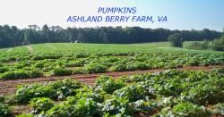 Small Of Ashland Berry Farm