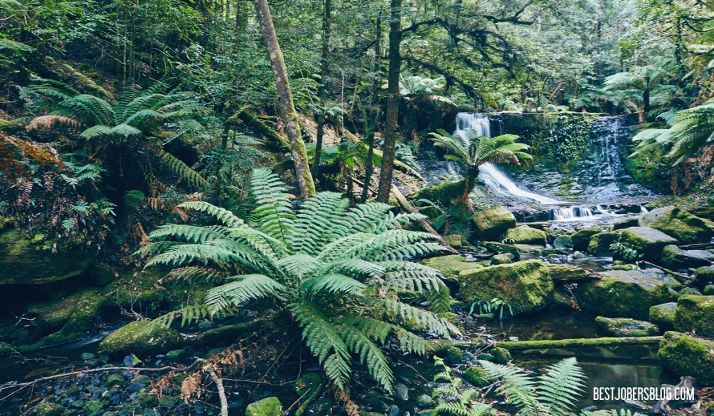 Horseshoe falls tasmanie