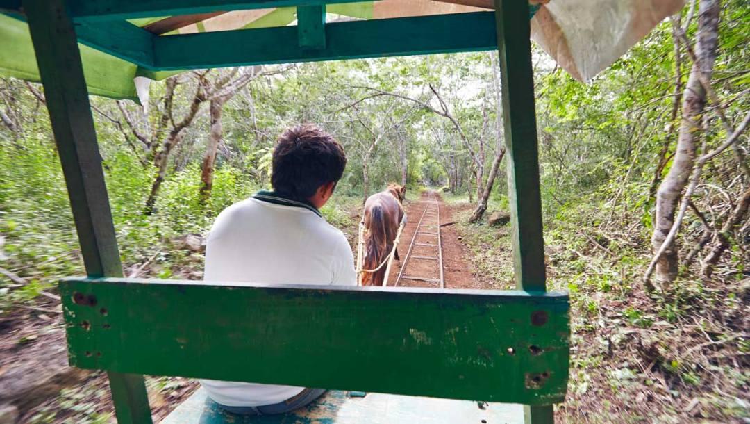 Cenotes-Cuzama cheval