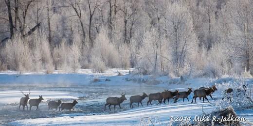 Web Elk Crossing Jan19