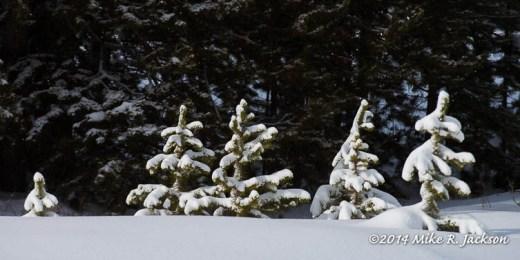 Web Small Pines Jan12