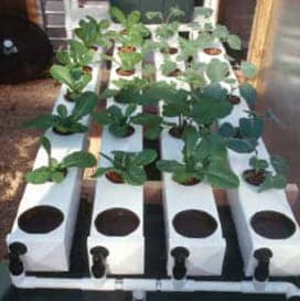 Build your own diy aeroponic system