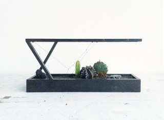 Black-Steel-Plant-In-Mini-Terrarium