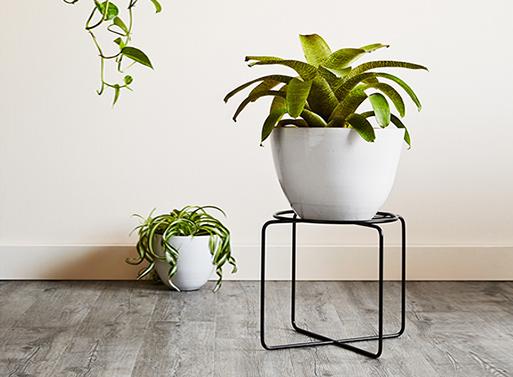 Quay Plant Stand