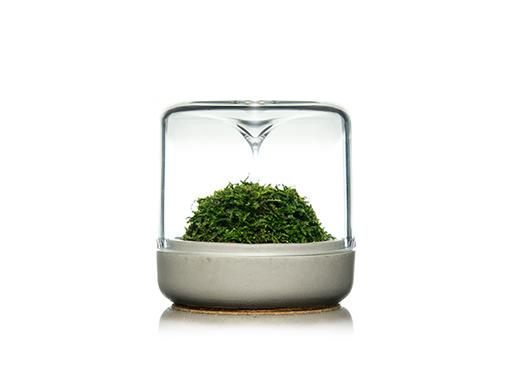 Moss Sanctuary-S