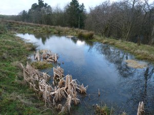 Middle or 'Nursery' Pond