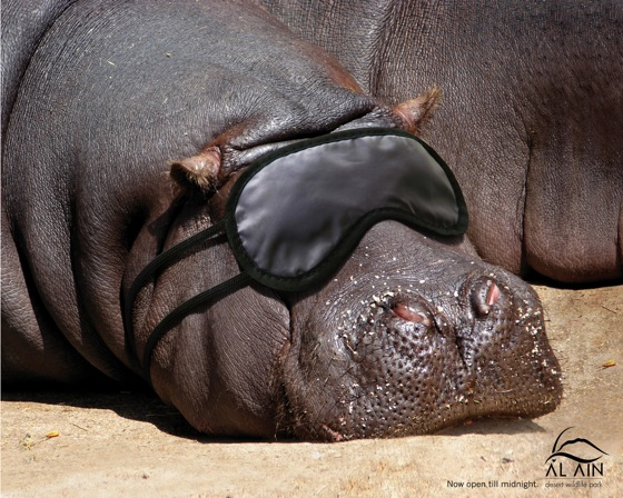 Al Ain - Hippo.jpg