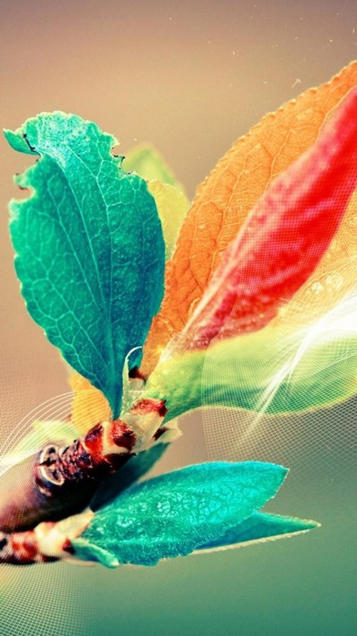 Colorful Leaves Wallpapers - 720x1280 - 306625