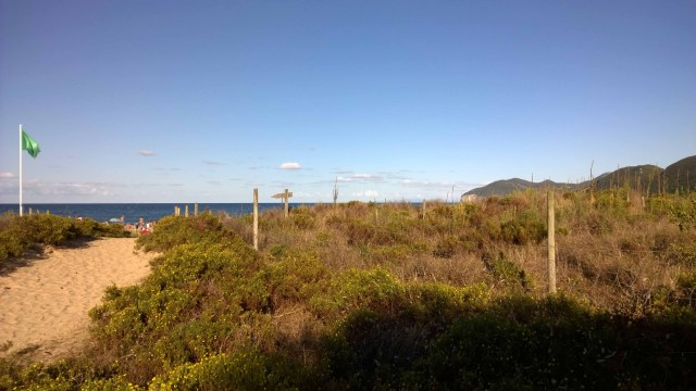 Photograph of grass and dunes behind beach at Noja, Spain.