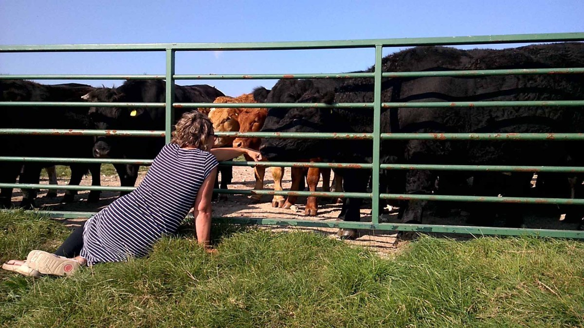 Sarah with cows on the Sussex downs