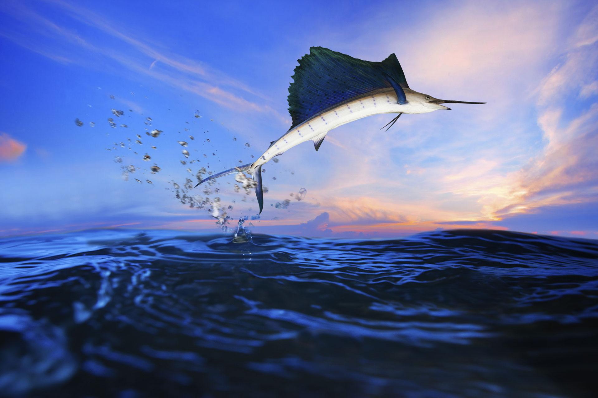 BigFish Jumping
