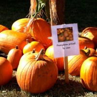 Fall Festivals, Farms & Pumpkin Patches – Things to Do in Houston, with Kids, during Fall 2016!