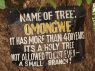 Een 'heilige boom' van meer dan 400 jaar oud. Hier vinden alle belangrijke vergaderingen plaats onder het toeziend oog van de boom die al honderden jaren meeluistert.