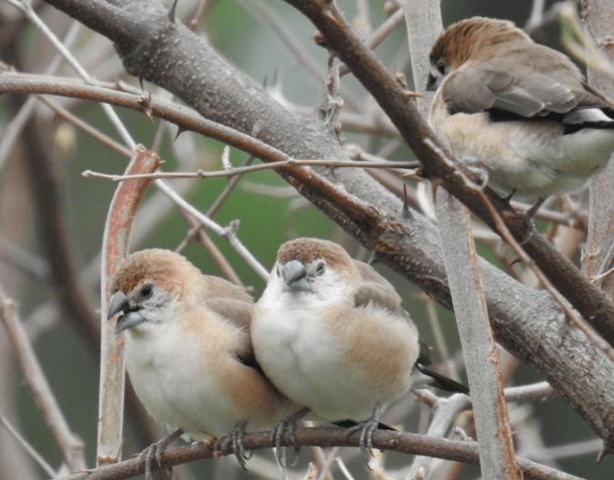 Birds at Jehan Numa Retreat