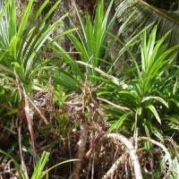 The Yard: Inherited Plants