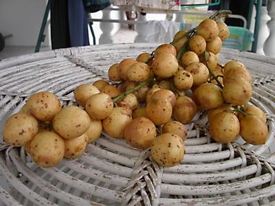 Strange Fruit pt. 6: Rambai & Tampoi