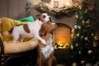 Two dogs and a Christmas tree