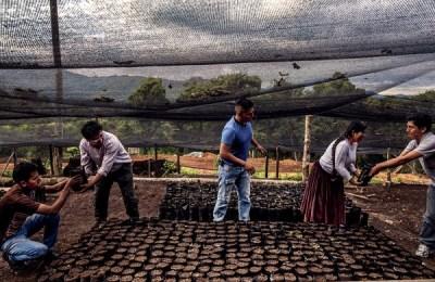Giovani Agronomi lavorano nel progetto Amazonia sin Fuego