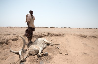 A man standing by his dead cow, in Hadigala village, Shinile district, Somali region. 8th July 2015.