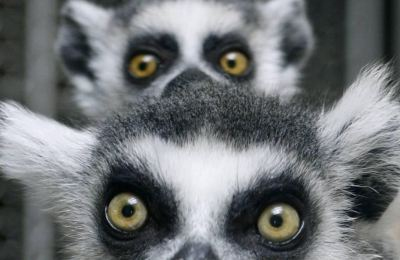 BioEcoGeo_lemuri