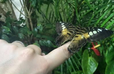 BioEcoGeo_casa farfalle modica 4