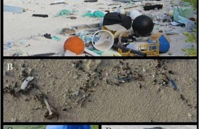 plastic_debris_on_Henderson_Island.jpg.650x0_q70_crop-smart