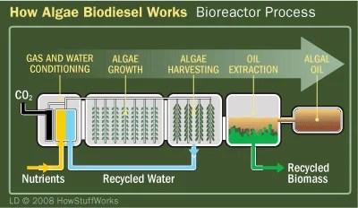 What Is Algal Biomass Bioenergy Consult