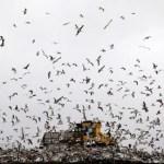 Municipal Solid Wastes in Bahrain