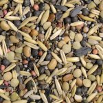 Cover crop seed blend of 17 species