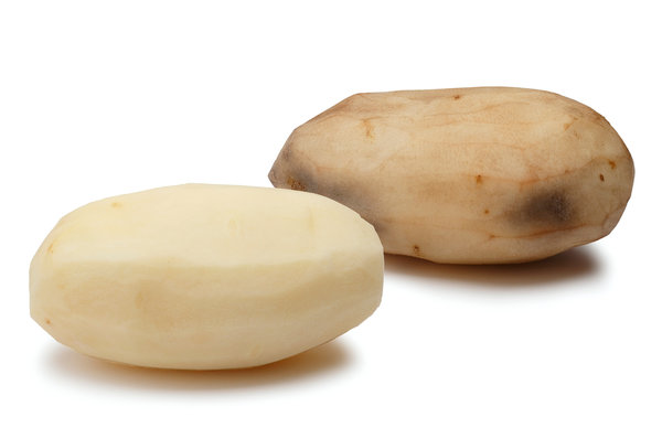 Comment Today on the next Genetically Engineered Potato