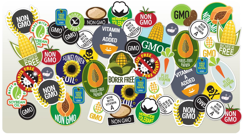 William Saletan on GMO myths in Slate